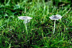 Wiesenschönheiten - Meadow beauties