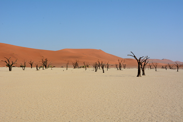 Namibia, Ancient Dried up Forest in Deadvlei