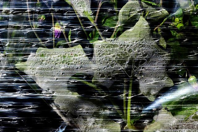 Cellophane Condensation