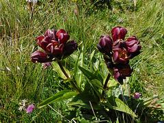 Saison des fleurs en montagne