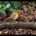 Is this called a round robin