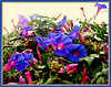eine Hecke mit Blüten