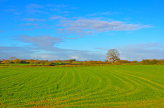 Gnosall fields