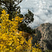 Driving to the crest of the Sandia mountains24