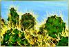 La Palma.  Stachelig. ©UdoSm