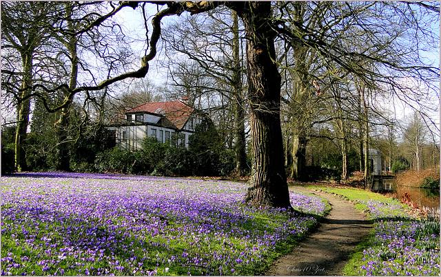 Purple Carpet again...
