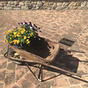 Old wheelbarrow.