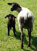 """""""Und ich habe ein schwarzes Schaf in Familie"""""""