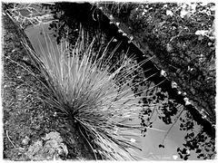 Spiegelung im Moor-Graben-Wasser