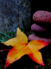 Zen Outono