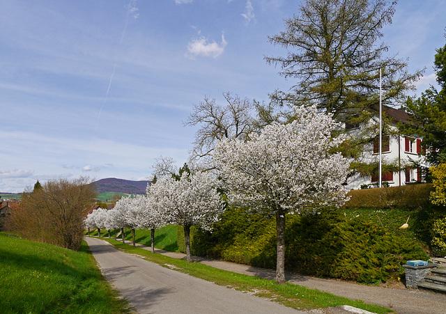 Frühling am Kirchweg