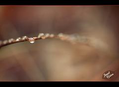 4/366: Dreamy Droplet