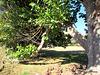 Trees in Wharepapa School Grounds