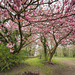 Through the foliage.. 'Mill house' - Eckington - p.i.p