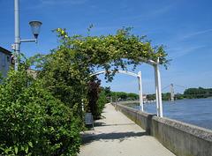 Ma promenade au bord du Rhône...