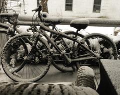Persistent Winter