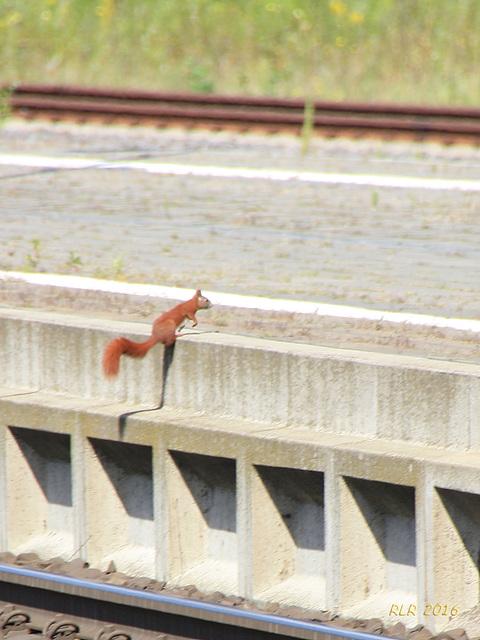 Begegnung auf Bahnsteig 4