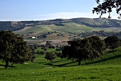 Andalusian fields