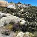 Cantueso, granite and cistus