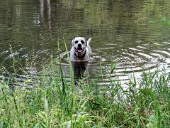 Branco in the pond