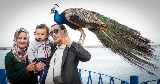 l'oiseau bleu à Bejaïa
