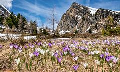 Spring at 2000 Metres