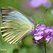 Purple Flower & Butterfly.