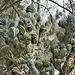 """Dinosaur Back"" Cactus, Take #1 – Desert Botanical Garden, Papago Park, Phoenix, Arizona"
