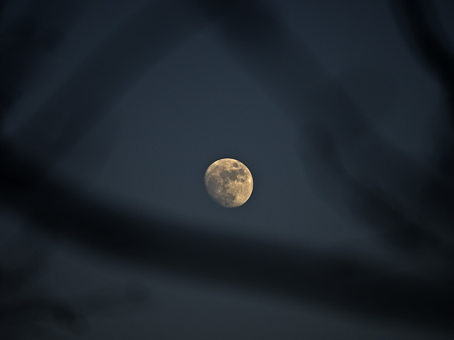 The shade of the branches around the moon