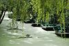 des barques sur l'eau