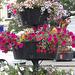Bideford flower displays on the quayside