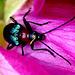 2 (26)...austria insect..käfer bug