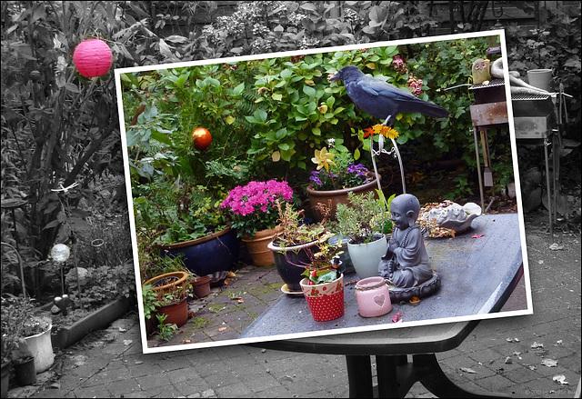 the ravencrow