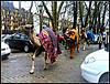 Desfile de dromedarios.