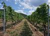 Gepflegte Weinkultur