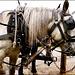 Barkerville horses.