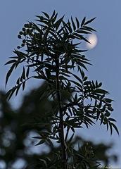Mondsüchtig (PiP)