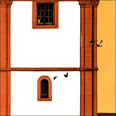 Birds & Windows
