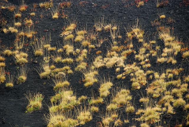 Grasbüschel auf schwarzem Boden