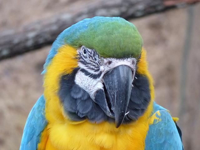 Palm Beach Zoo (15) - 26 January 2016