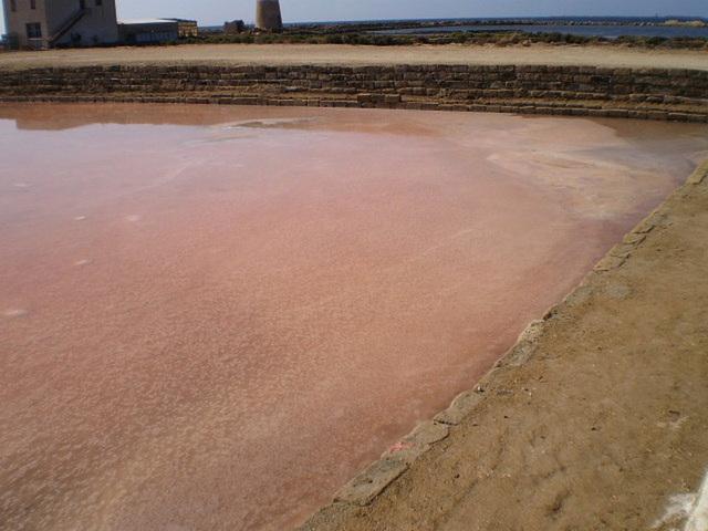 Pink salt pit.