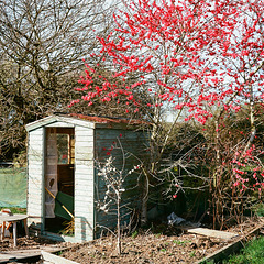 shed and blossom