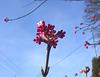 Frühling in rot weiß blau - printempo en ruĝa blanka blua