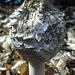 Met this fungi walking the dog