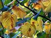 i colori del primo autunno