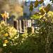 Novembersonne an der Wakenitz