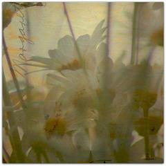 ...daisy...