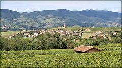 Oingt (69) 20 août 2014. Beaujolais, vue en direction de Saint-Laurent-d'Oingt.