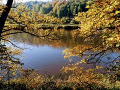 Goldener Herbst im Elbtal