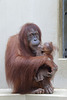 Mutter und Kind (Zoo Heidelberg)